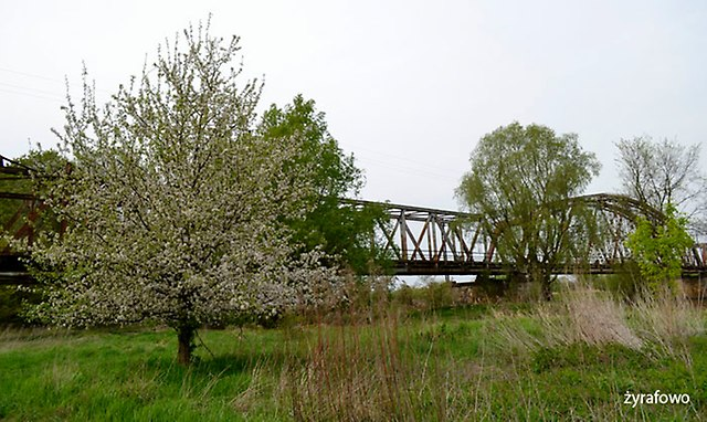 wiosna 2015_08