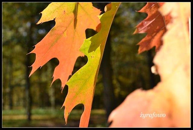jesien 2012_70