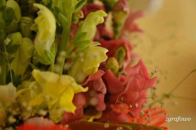 kwiaty_03