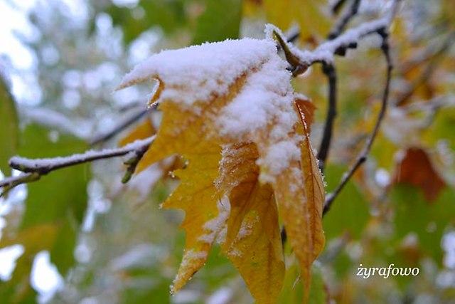 jesien 2012_135