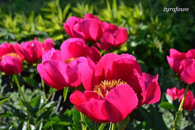 Ogrod Botaniczny_29