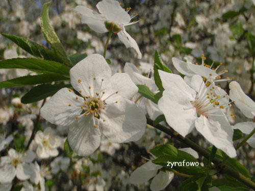 wiosna 2010_10