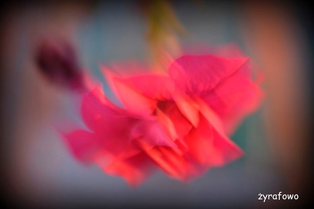 kwiaty 2014_02