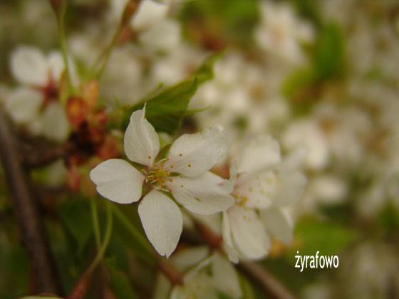 wiosna 2011_42