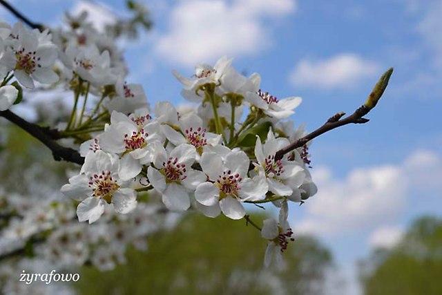 wiosna 2014_96