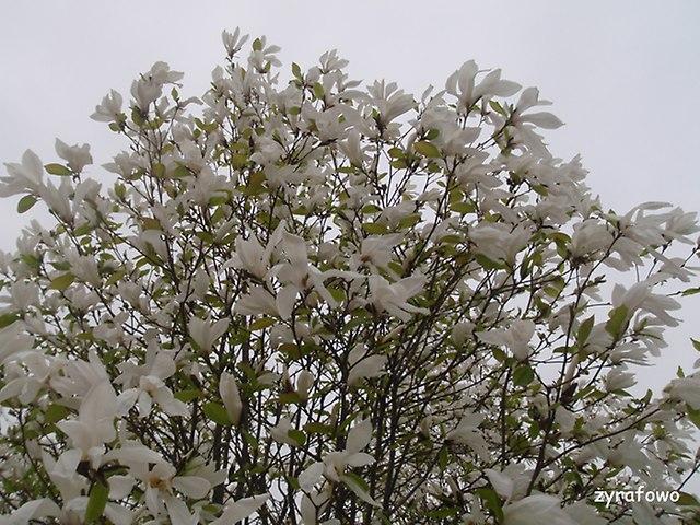 wiosna 2016_10