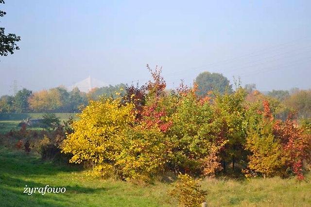 jesien 2012_57