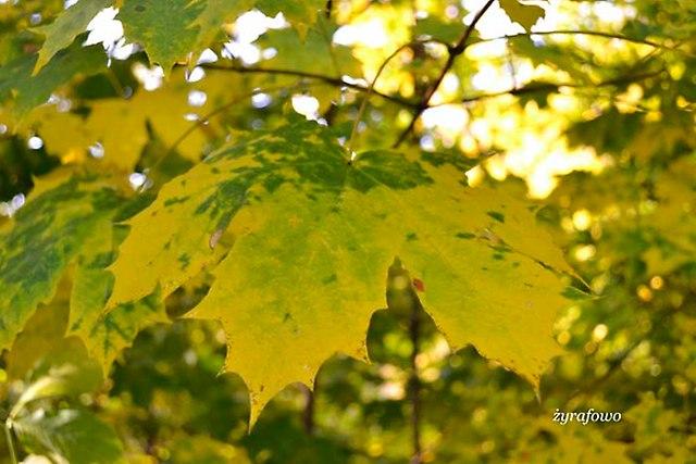 jesien 2012_150