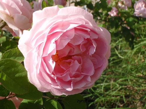 kwiaty_47