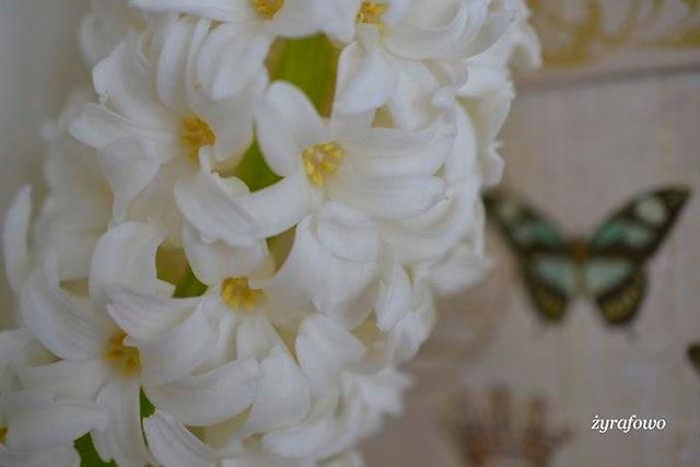 wiosennie_03