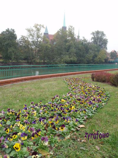 jesienny Wroclaw