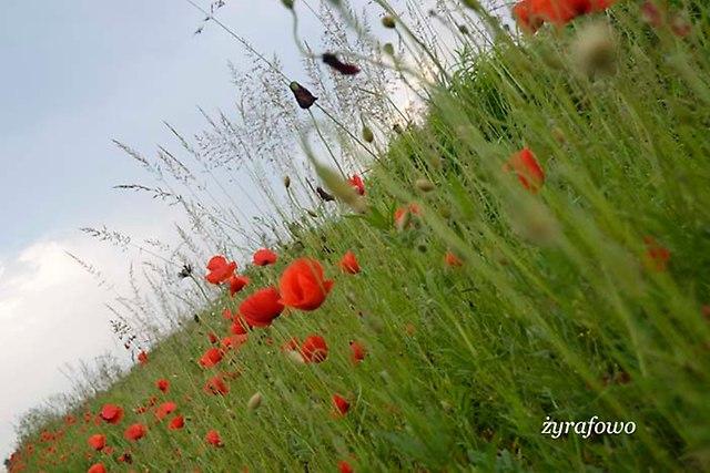 wiosna 2013_193