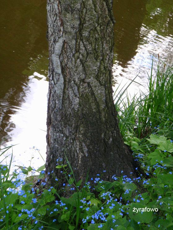 wiosna 2011_80