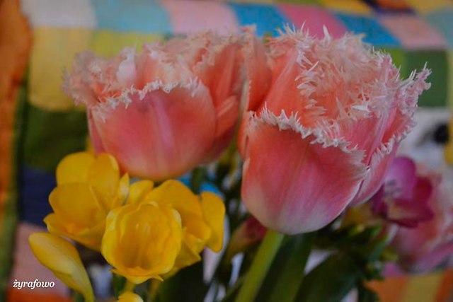 kwiaty 2014_23