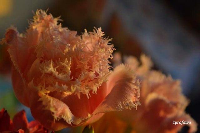 kwiaty 2014_27