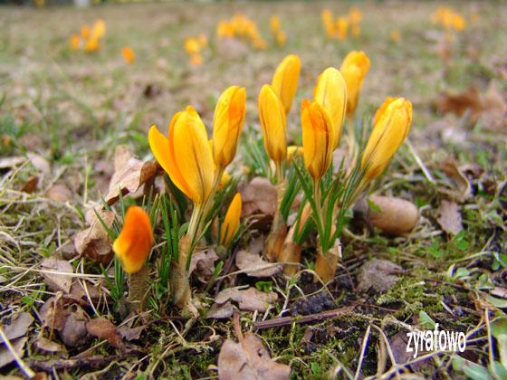 wiosna 2011_07