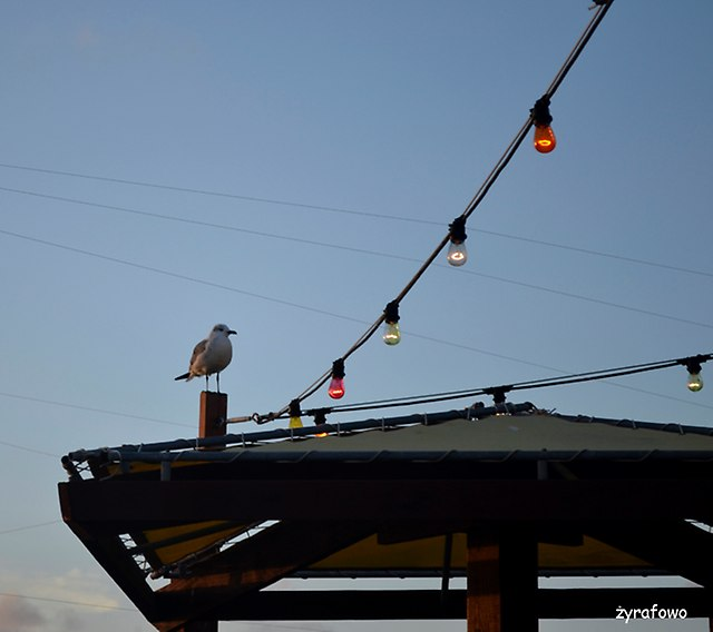 Corpus Christi 2014_06