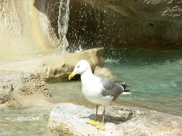 ptaki_40