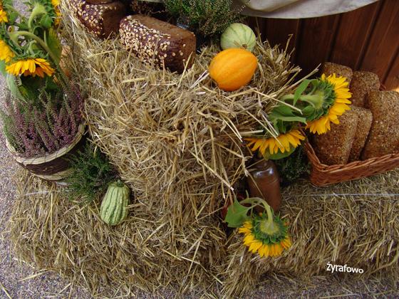 Ogrod Botaniczny 2011.08_15