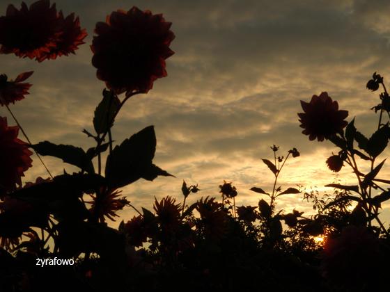 dzialka 2011_27