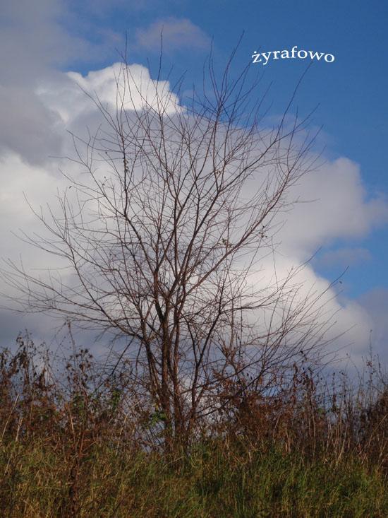 jesien 2010_41