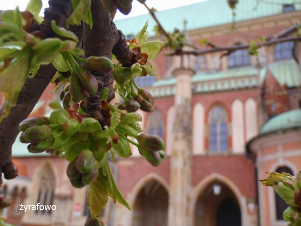 wiosna 2012_36