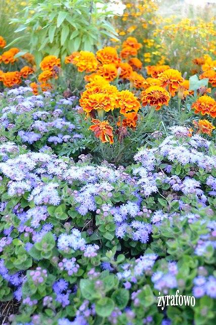 kwiaty 2012_36