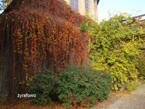 jesien 2011_11