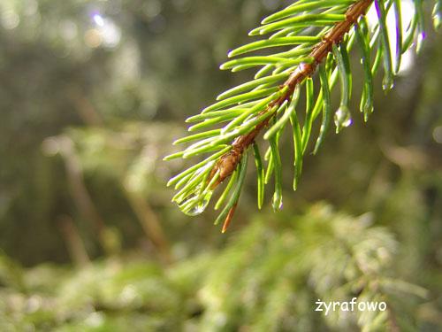 Tatry 2010_26