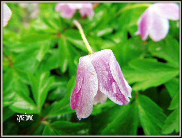 wiosna 2012_45