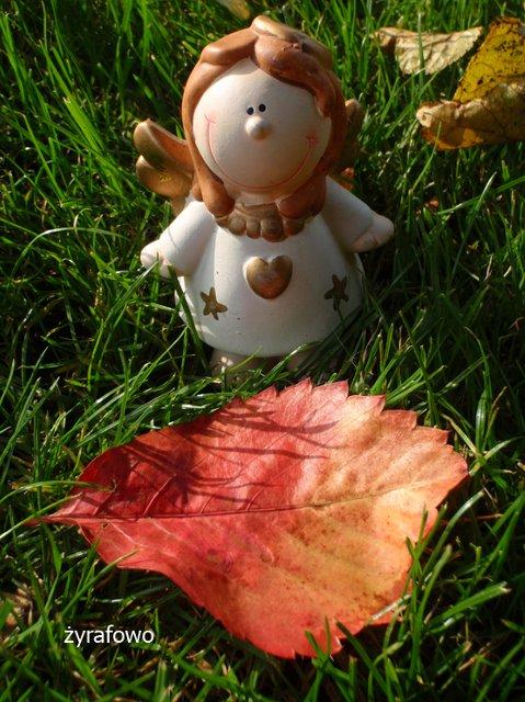 jesien 2011_10