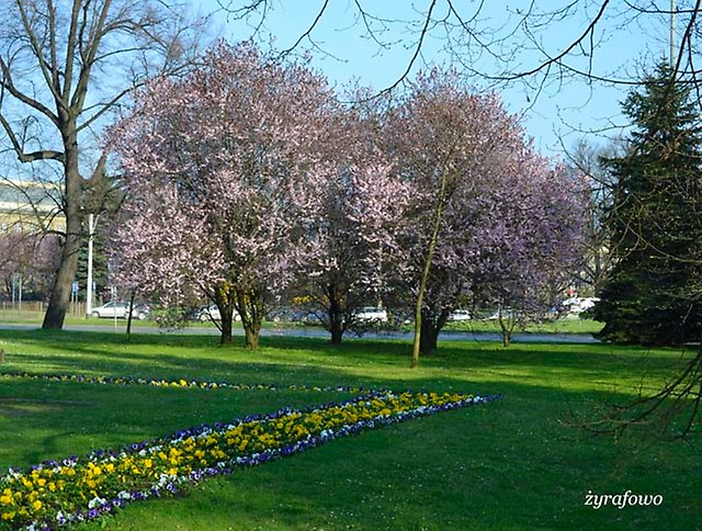 wiosna 2014_31