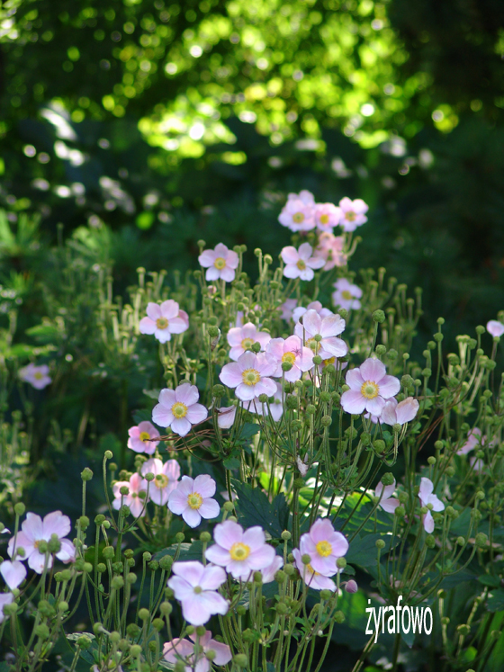 Ogrod Botaniczny 2011.08_21