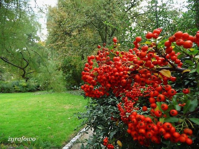 Ogrod Botaniczny 2012_02