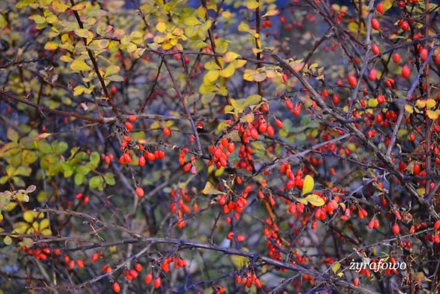 jesien 2012_226