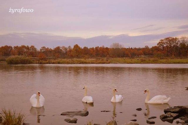 jesien 2012_238