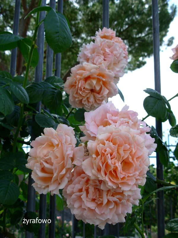 kwiaty_23
