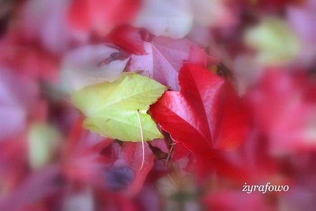 jesien 2013_134