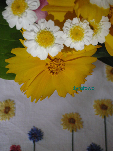 kwiatki 02