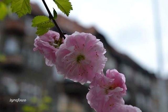 wiosna 2013_55