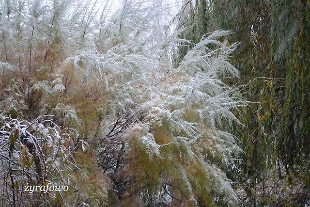 jesien 2012_127