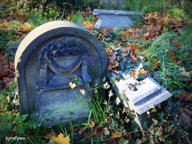 Cmentarz Zydowski_14