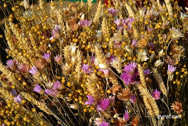 Ogrod Botaniczny 2014_38