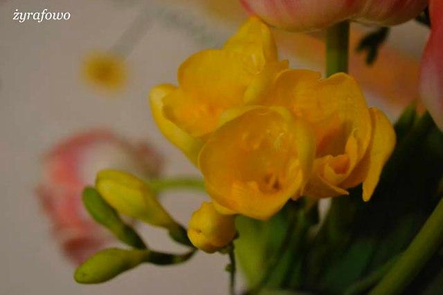 kwiaty 2014_14
