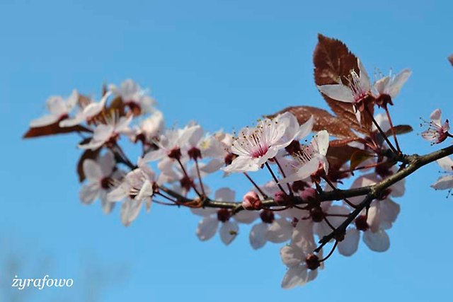 wiosna 2014_48