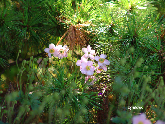 Ogrod Botaniczny 2011.08_08