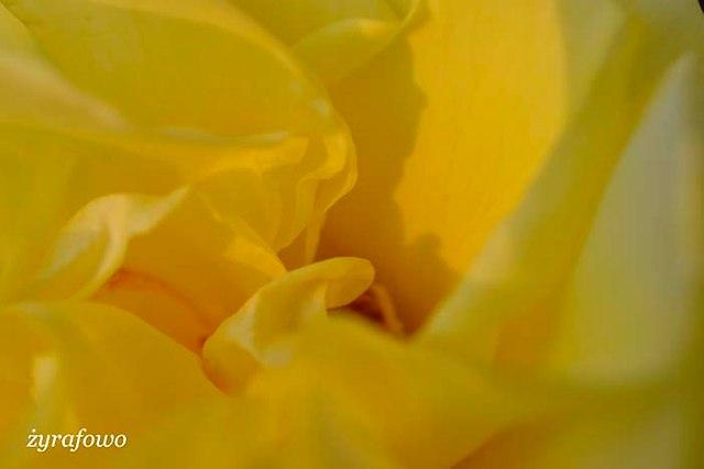 wiosna 2014_200