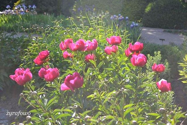 Ogrod Botaniczny_26