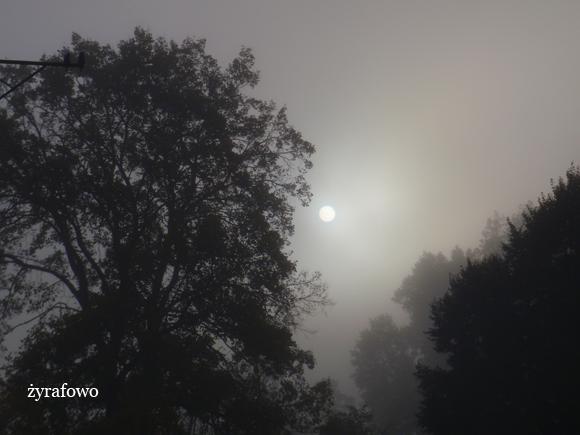 jesien 2011_59