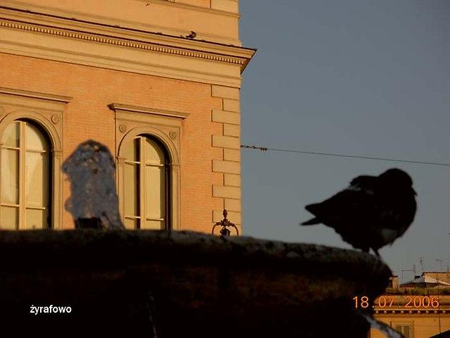 ptaki_32